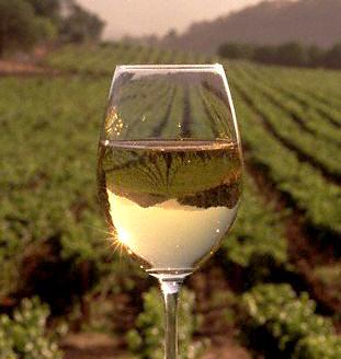 Moravian Wine